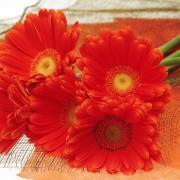 красивые открытки 2014 цветы