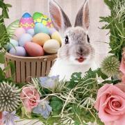 кролик красивые открытки