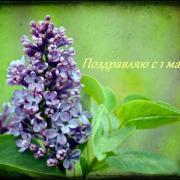 сирень 1 мая открытка