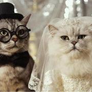 прикольные открытки на свадьбу картинки