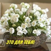 цветы открытка с днем рождения фото