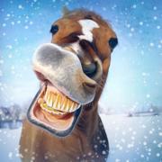 открытка с лошадью бегущей