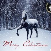 рыжая лошадь открытка новая