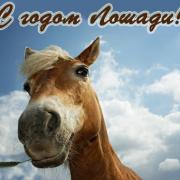 лошади зимой 2014 новый год