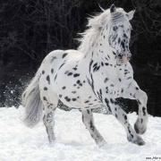открытка с нарисованной лошадью