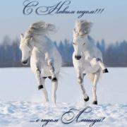 открытки с лошадью и девушкой
